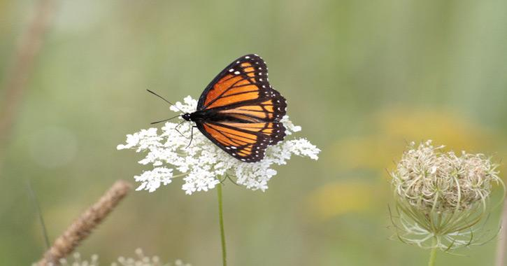 Where Have All Monarchs Gone >> Where Have All The Monarchs Gone Earth To Body